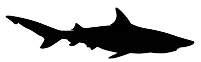 Shark Decal